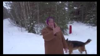 За что убили Федю или  почему в лесу можно убивать собак  Остановим безнаказанное убийство