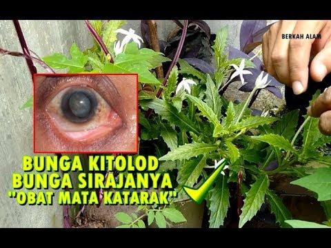 Download 580 Koleksi Gambar Bunga Obat Mata Paling Keren