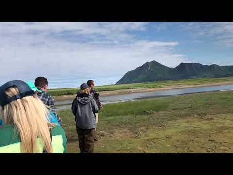 Bear Viewing at Hallo Bay, Alaska in Katmai National Park
