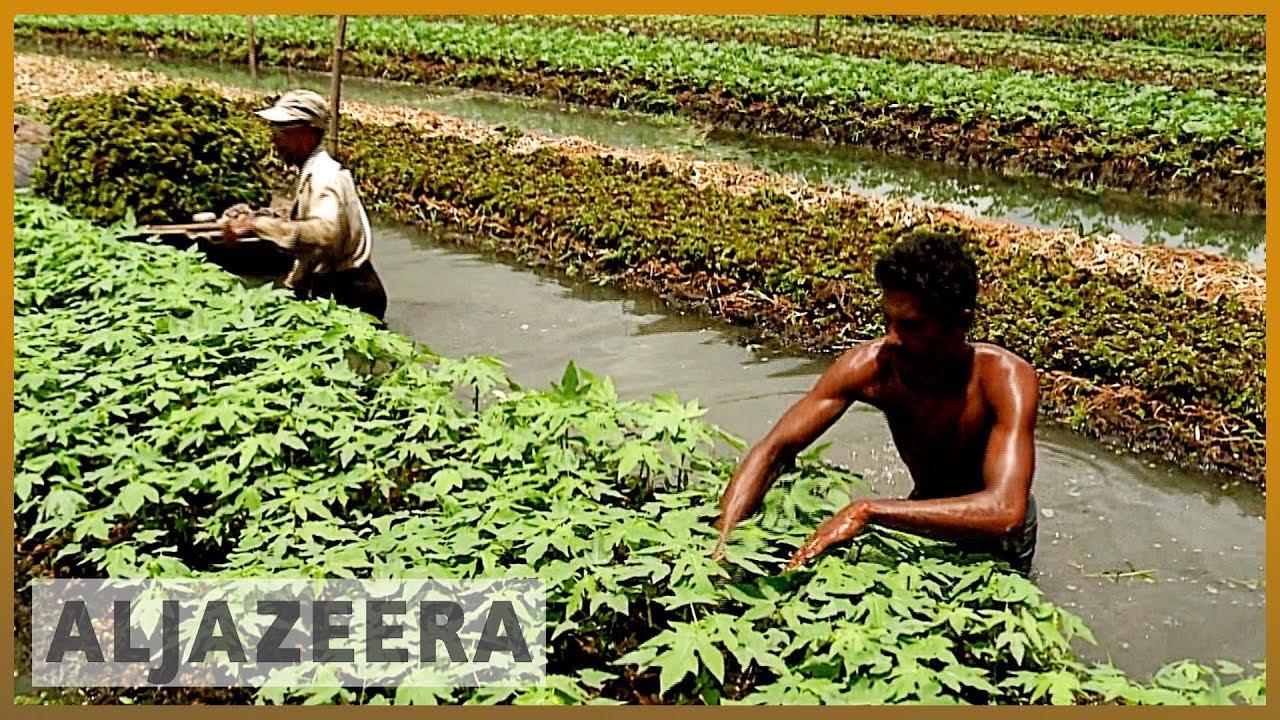 AlJazeera English:Floating farms in Bangladesh help farmers survive floods