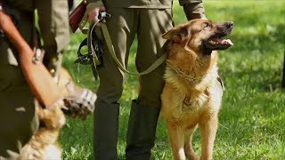 Want to Adopt a Retired Military Dog? Here's How | Southern Living