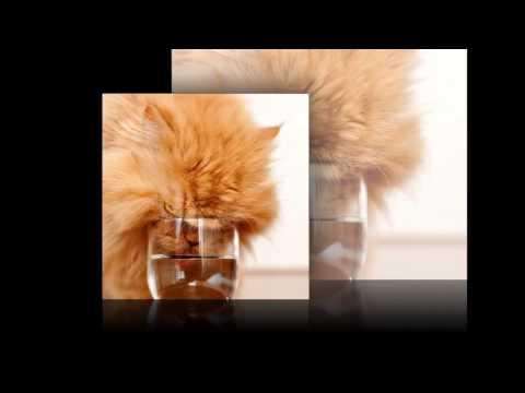 Сердитый кот-звезда интернета фото