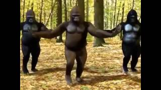 Gorilla Funny Dj Dance