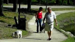 Doberman Hound Mix Noah Off Leash Dog Training Dogtra Pager E Collar Co Starring Snozzie Dog