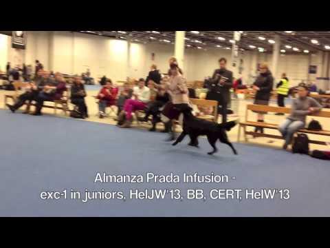 Helsinki Winner flatcoats best of breed