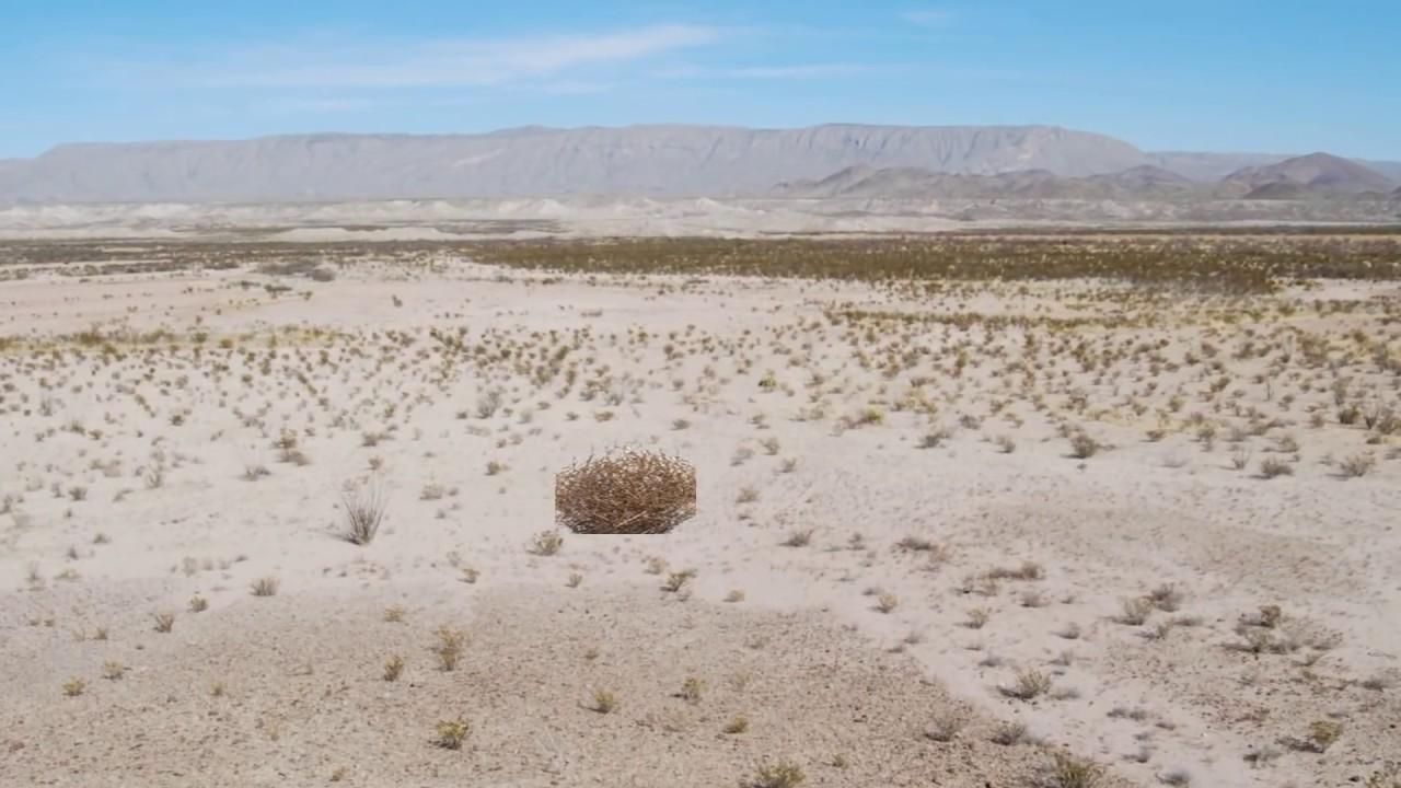 Image result for tumble weed desert