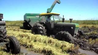 cosecha de arroz en corrientes
