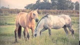 Laberinto--Pepito y su caballo DjMarf!