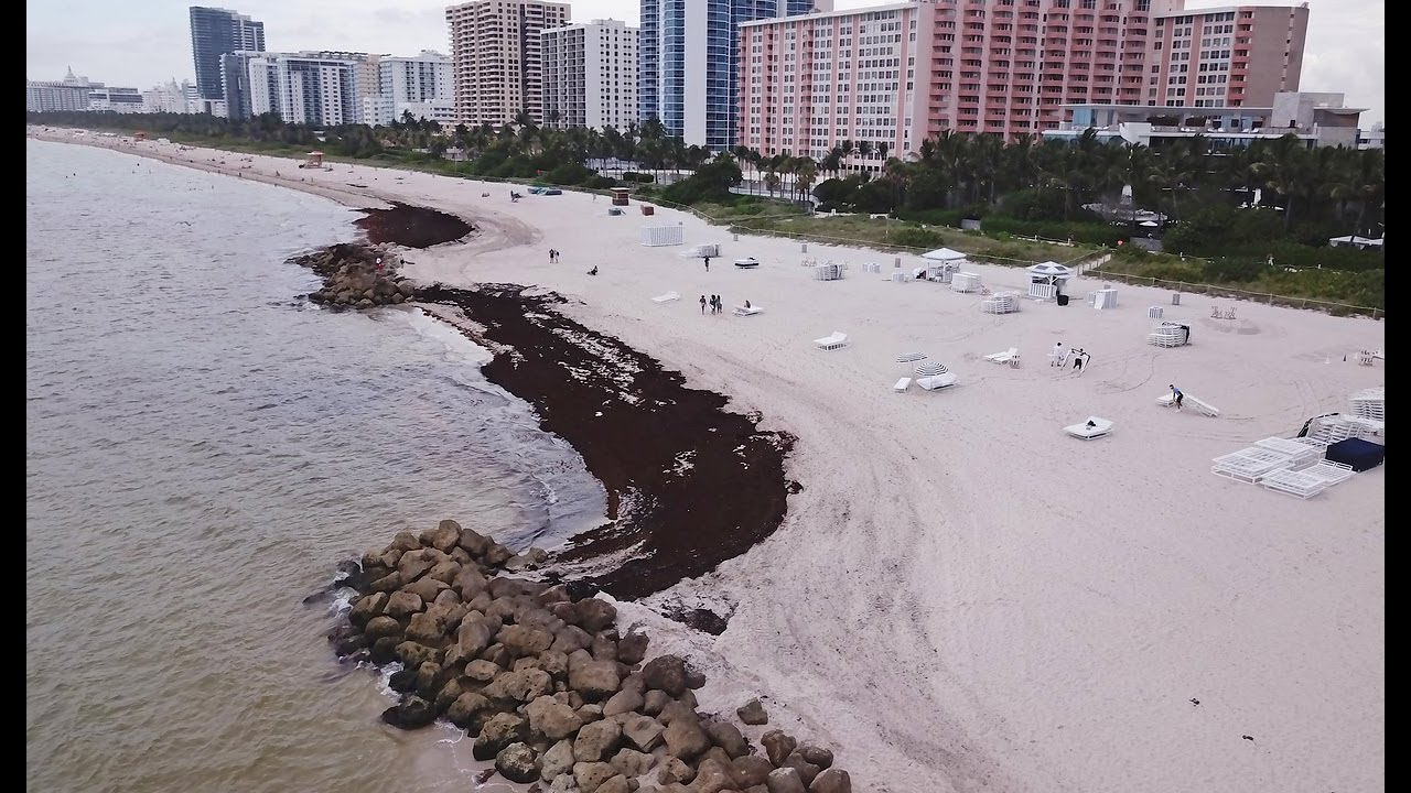 Miami Beach looking for solutions for sargassum problem