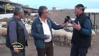 Çiftçinin Gökkuşağı-Çine Aydın da Hayvancılık...