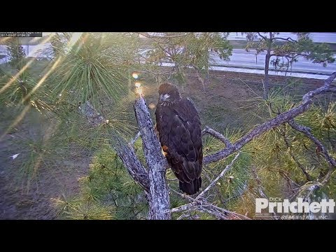 SWFL Eagles ~ E9 ~ Angel Of The Morning Tribute 7.14.17