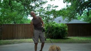 Annie The Goldendoodle | Redeeming Dogs | Fort Worth Dog Training