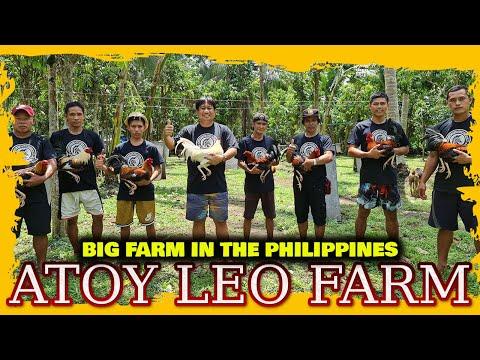 Nice View Cording Area Big Farm Philippines ATOY LEO FARM