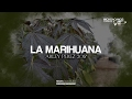 Download LA MARIGUANA - ARLEY PEREZ ( CORRIDOS 2017 ) © 2017 cmvpromotions MP3 song and Music Video