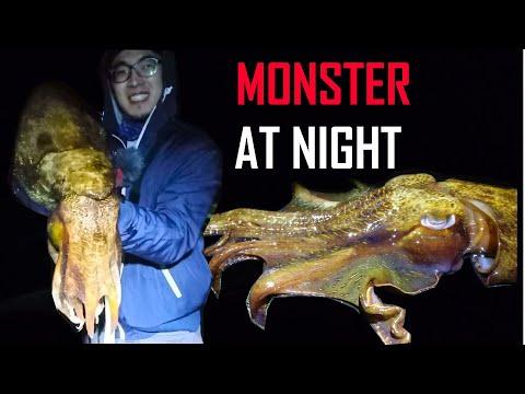 Winter GIANT Cuttlefish - 10kg Catch !! (PART 1)