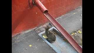 KSN Охота кошки на неведомую зверушку