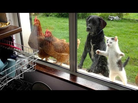 The FUNNIEST ANIMAL VIDEOS, are you READY FOR THIS LAUGH BOMB?!