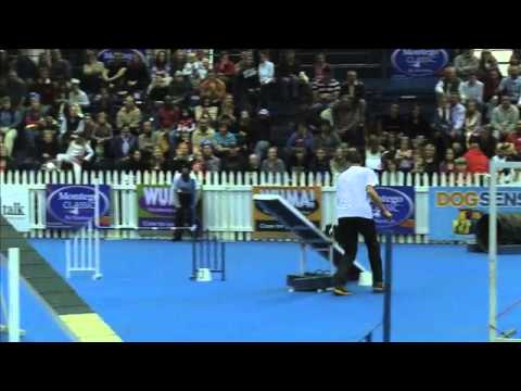 Sport News, agility: Border Collie Levi in dog agility contest, South Africa