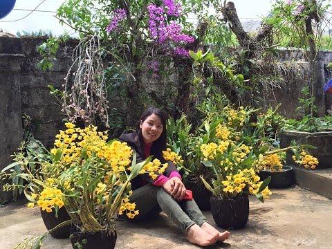 Vẻ đẹp hoa Lan - Vườn lan Trường Sơn