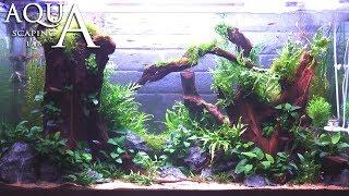 """Aquascaping Lab - Tutorial Natural plant aquarium """"Joy of Life"""" (size 110 x 45 x 60h 300 L)"""