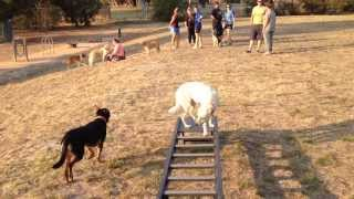 Dog Training Complex Skills Melbourne