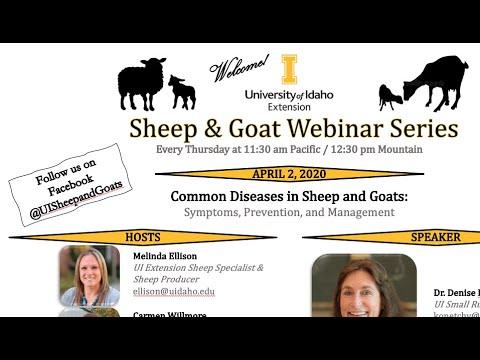 Common Diseases In Sheep And Goats (UI Extension Sheep & Goat Webinar Series)