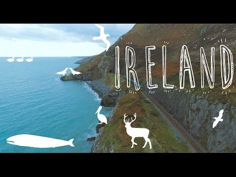 Ireland travel guide for birds (Ireland by drone)