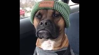Cool dog / Kühler Hund 'Massive Green'