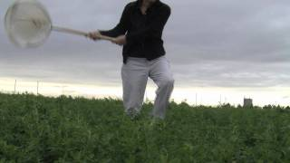 Sweep Net Technique