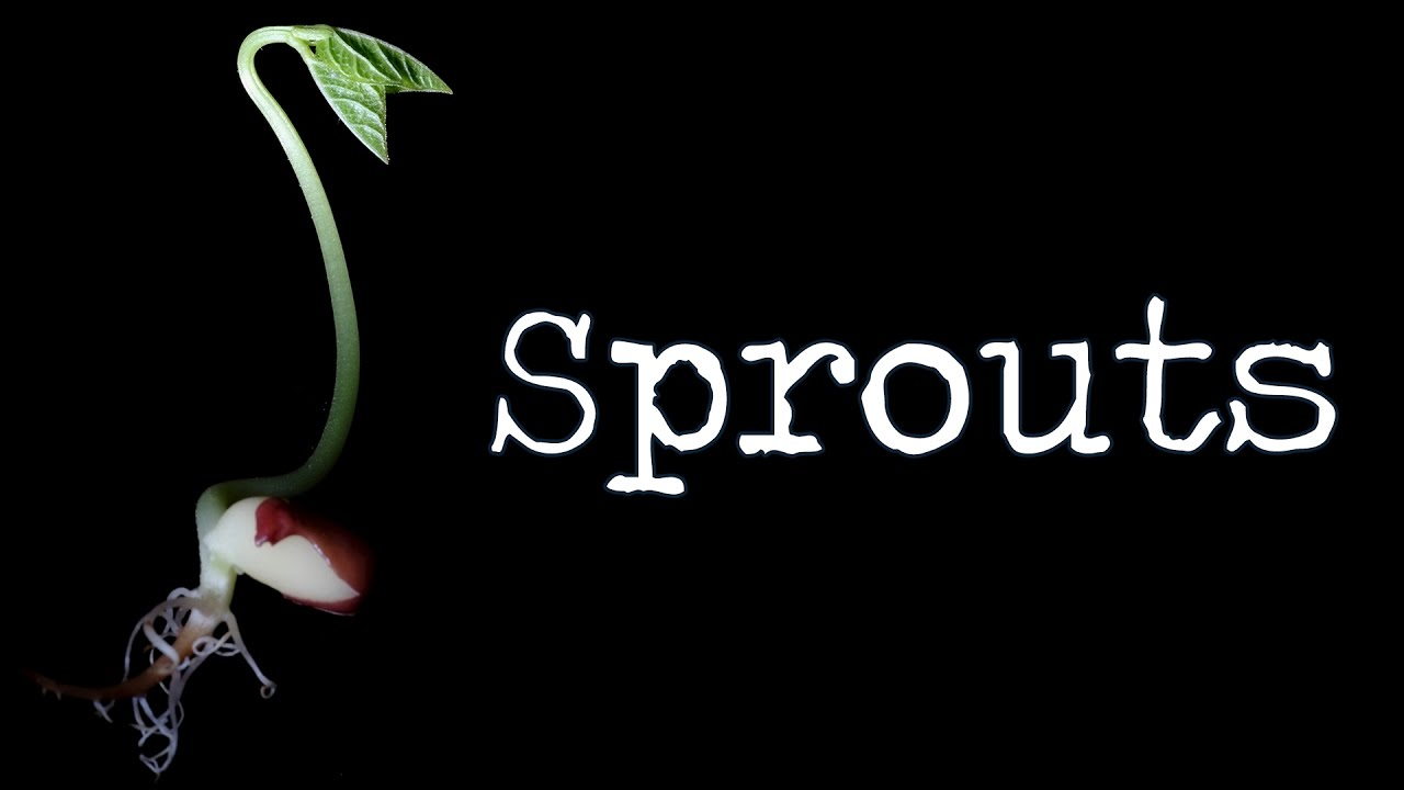 Sprout Deutsch