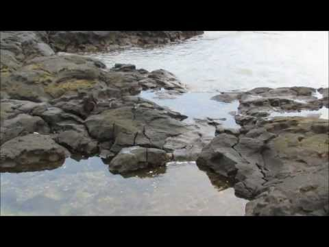 Beautiful Big Island Tidepools and Sea Life at Puuhonua o Honaunau National Historical Park, Hawaii