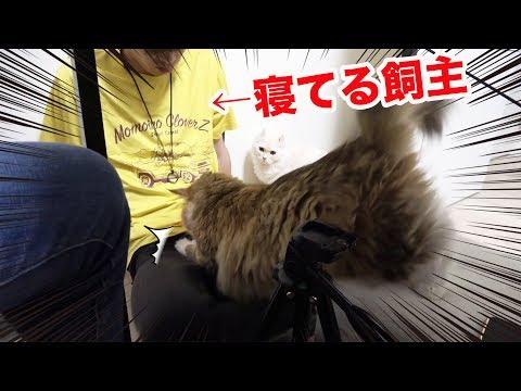猫に襲撃されました・・・