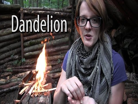 Survival Food  - Dandelion