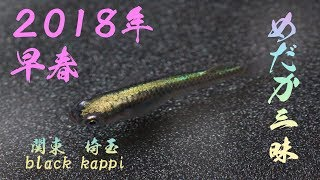 メダカ三昧 2018 早春 thumbnail