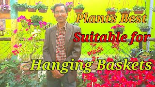 which-plants-are-best-suitable-for-hanging-baskets