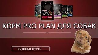 ❖ Корм pro plan для собак ❖(Купить корм pro plan для собак в интернет магазине PrirodaUral: Сухой корм Pro Plan для щенков - http://vk.cc/5c3Sca Сухой корм..., 2016-05-25T12:55:49.000Z)