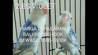 HARGA LOVEBIRD DI PASARan FEBUARI 2019