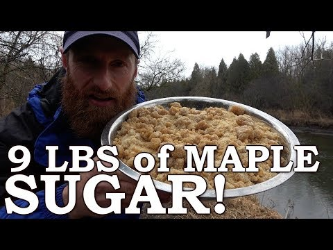 MASSIVE pile of Maple SUGAR on OPEN FIRE | Home Made EVAPORATOR, WOOD BOILER, CHICKENS, GARDENS