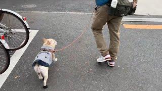 積極的に、コンビニに誘う犬