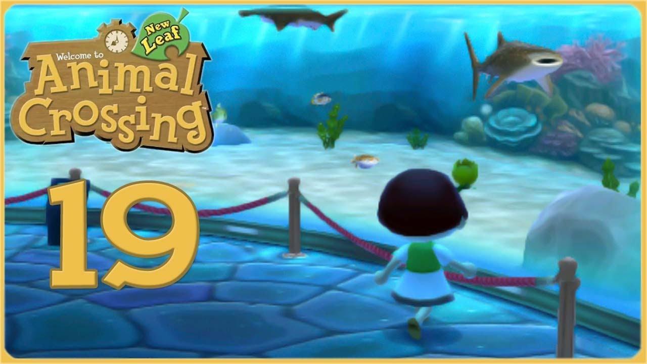 Whale Shark Wonders Beetle Bought Dreams Animal Crossing New Leaf Episode 19