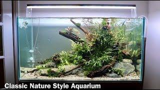 Nature Aquarium Aquascape Tutorial   Low Maintenance Home Aquascape Step By Step