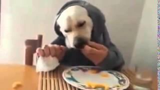 Smieszne filmiki psy Funny dogs