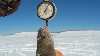 Рибалка. Боротьба з окунем 900 гр. Волосінь 0.09 мм.