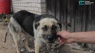 Репортаж о строительстве приюта для собак в Смоленске