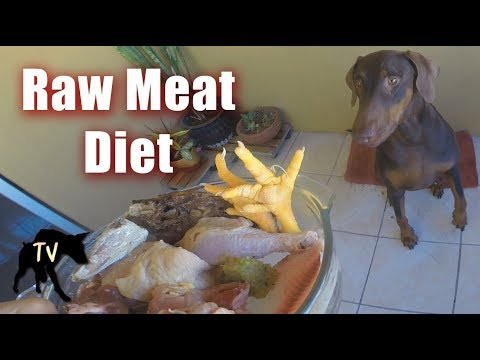 Doberman's Raw Food Diet | Raw Feeding Vlog