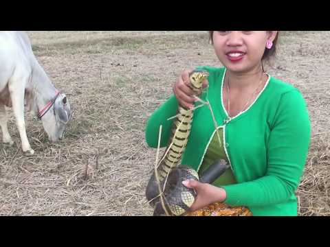 Thumbnail: Incredible Girl catch Village Snake With Hand-Beautiful Girl Catch Snake at the rice fiel