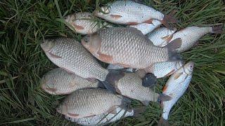 Ловля КАРАСЯ на ФИДЕР в ДЕКАБРЕ Река ДНЕСТР ловля ЖЕРЕХА на спиннинг в декабре