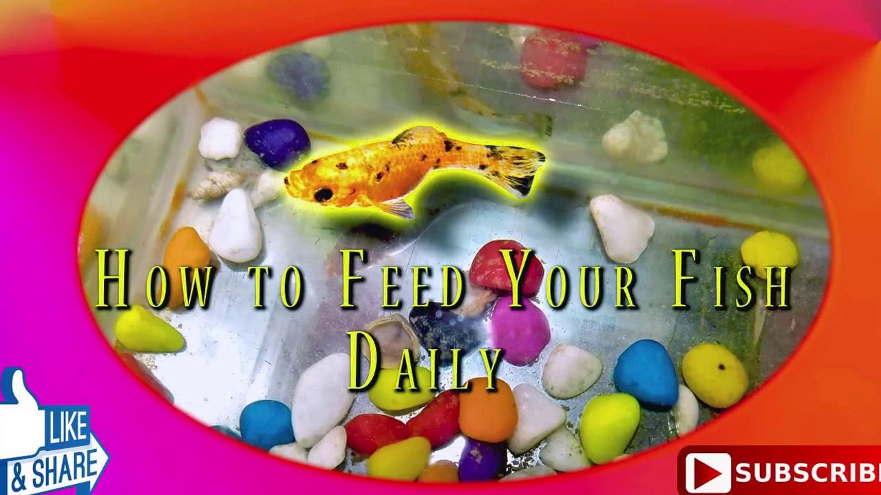 How often do you feed molly fish youtube for How often to feed fish
