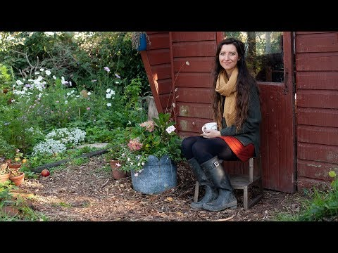 September Allotment Garden Tour 2018 thumbnail