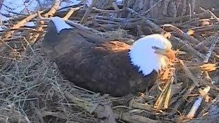 Decorah Eagles ~ Morning Highlights ~ Business As Usual ~ 03-29-2014